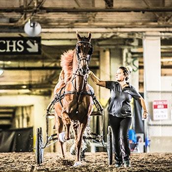 woman walking a horse through the stalls